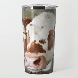 Calf in stalls at farm Travel Mug
