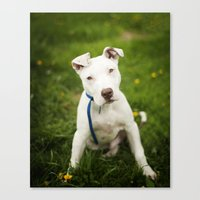 pit bull Canvas Prints featuring Pit Bull Puppy by Kaelyn Ryan Photography