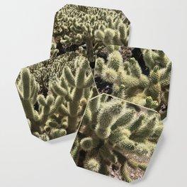 Desert Bloom Coaster