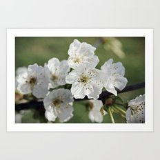 Petite Blossoms {3} Art Print
