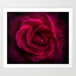 Texture Of A Rose Art Print
