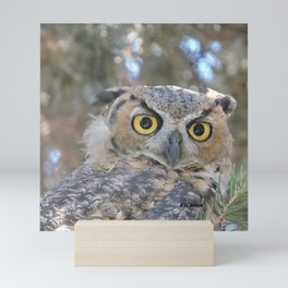 Young Owl at Noon Mini Art Print