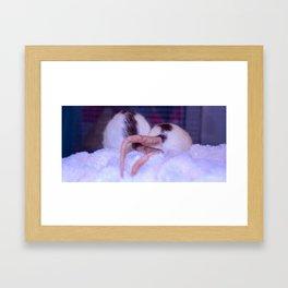 Ratties Framed Art Print