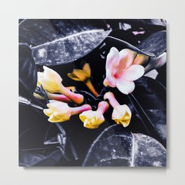 black and white leaves pink yellow white flowers jasmine Metal Print
