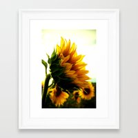 sunflower Framed Art Prints featuring Sunflower by 2sweet4words Designs