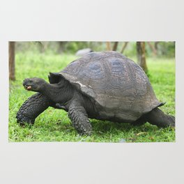 Galapagos Giant Tortoise Rug
