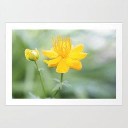 Yellow Globeflower - Golden Queen Trollius x Cultorum 1 Art Print