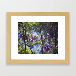 Jacaranda Tree II Framed Art Print