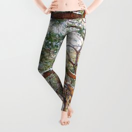 Snow White Point Gardens Leggings