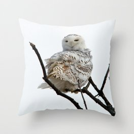 Twist and Shout (Snowy Owl) Throw Pillow