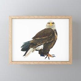 The Bald Eagle Framed Mini Art Print