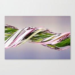 Pink flower (slit scan) Canvas Print