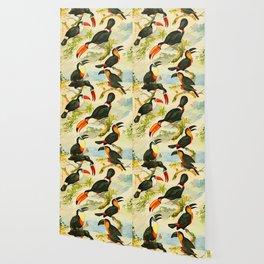 Album de aves amazonicas - Emil August Göldi - 1900 Tropical Colorful Amazon Birds Wallpaper