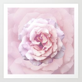 Pink Rose Beauty Art Print