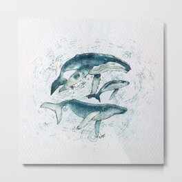Humpback whale family  Metal Print