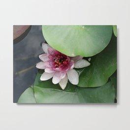 Beautiful Lotus Flower Metal Print