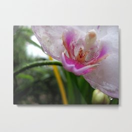 Orchid Mornings Metal Print
