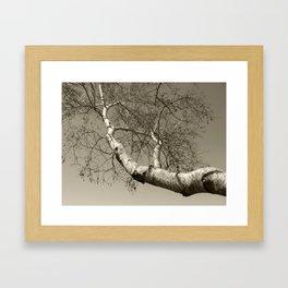 Birch tree #01 Framed Art Print