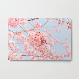 Blossoms in Spring Metal Print