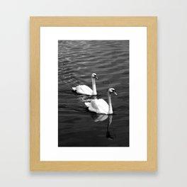 A Pair of Swans Framed Art Print