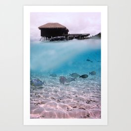 Tropical Maldives Snorkeling Fun Coral Fish In Turquoise Sea Art Print