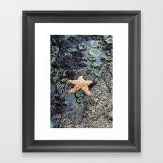 Starfish - La Push Framed Art Print