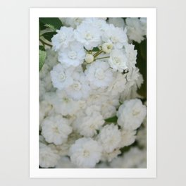 Deutzia Pure and Simple Art Print