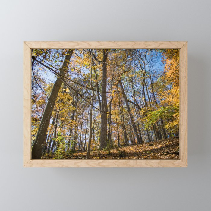 Golden Forest Leaves | Fall Autumn Nature Landscape Photography of Trees in Midwest Forest Framed Mini Art Print