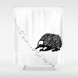 Echidna  (Tachyglossus aculeatus) Shower Curtain