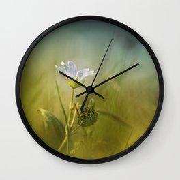 Cerastium fontanum subsp. vulgare  Wall Clock