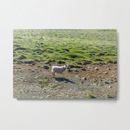 The Lone Sheep Metal Print