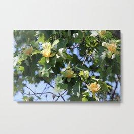 Tulip Maple Metal Print