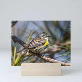 Yellow Rumped Warbler in May Mini Art Print