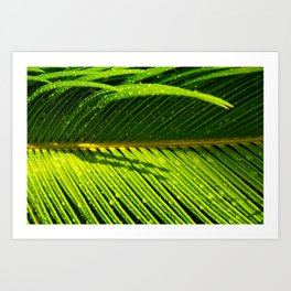 Showered Leaf  Art Print