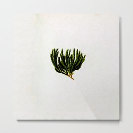Botanical Moss Metal Print