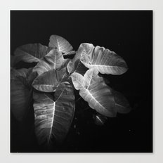 Elephant Ears in the Dark Canvas Print