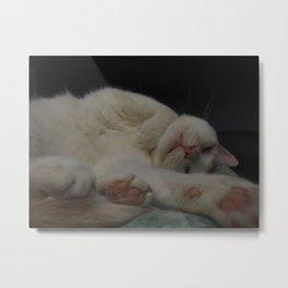 Fuzzy Tummy Sleepy Kitty Metal Print