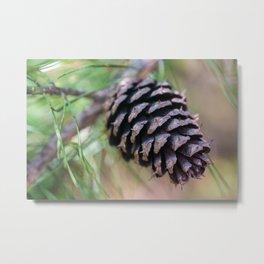 Macro Pine Cone Metal Print