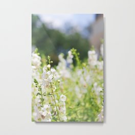 Flower Photography by Allie Pollock Metal Print