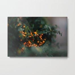 Winter Berries in London Metal Print