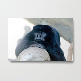 Howler just chilling Metal Print