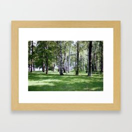 Peterhof Woods Framed Art Print