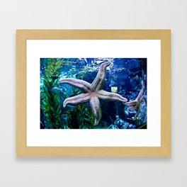starr Framed Art Print