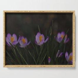 Crocus beautiful purple flower    spring Serving Tray