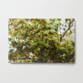 Fresh Japanese Maple Metal Print