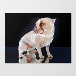 Super Pets Series 1 - Super Maya 3 Canvas Print