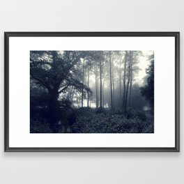 Misty woods... Framed Art Print
