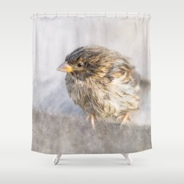 Sparrow - Faulty forecast Shower Curtain