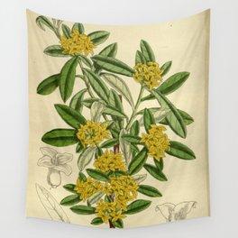 Daphne giraldii, Thymelaeaceae Wall Tapestry