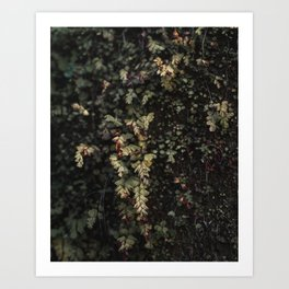 Vines and Ferns Nature Photography Art Print